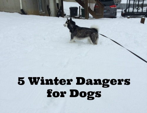 5 Winter Dangers for DOgs